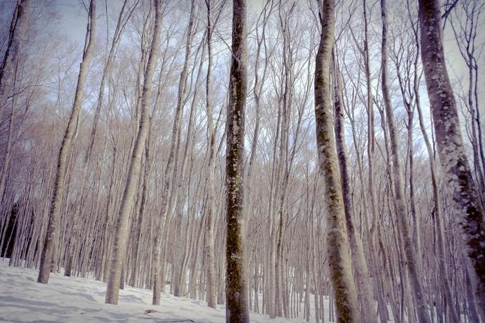 「雪の上を歩くって楽しい。美人林でスノーシュー!」_a0000029_22414855.jpg