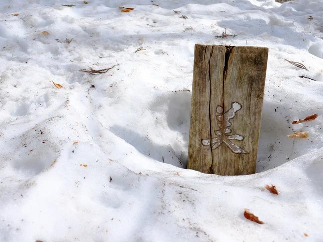 「雪の上を歩くって楽しい。美人林でスノーシュー!」_a0000029_22513412.jpg