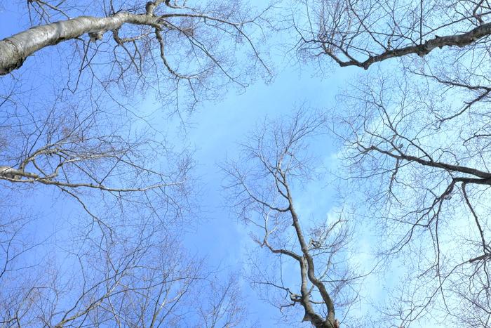 「雪の上を歩くって楽しい。美人林でスノーシュー!」_a0000029_22551729.jpg