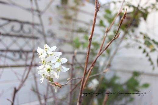 明日3日【NHK首都圏版ニュース】に手作りのDIY小屋が登場&春の庭♪_f0023333_22433481.jpg