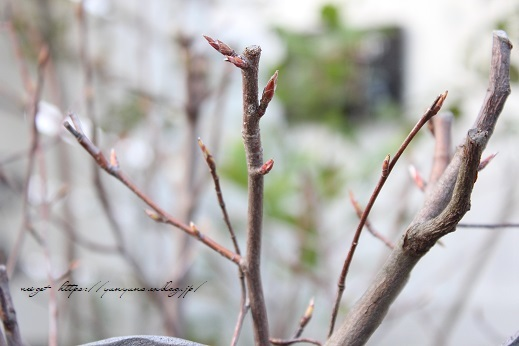 明日3日【NHK首都圏版ニュース】に手作りのDIY小屋が登場&春の庭♪_f0023333_22433691.jpg