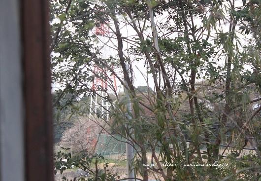 明日3日【NHK首都圏版ニュース】に手作りのDIY小屋が登場&春の庭♪_f0023333_22434070.jpg