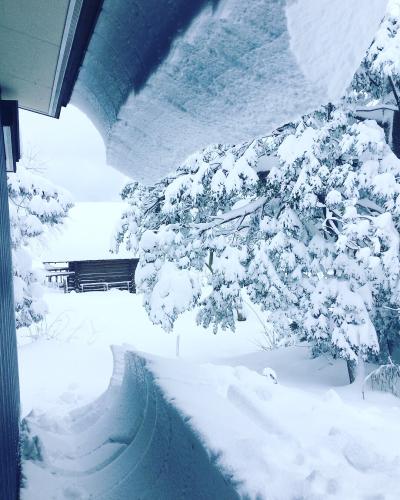 大雪_a0197647_11414713.jpg