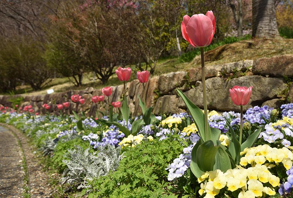 春らんまん_e0164563_09373810.jpg