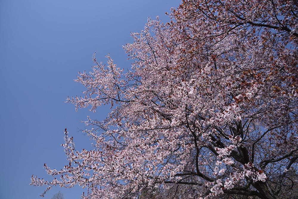 春らんまん_e0164563_09373862.jpg