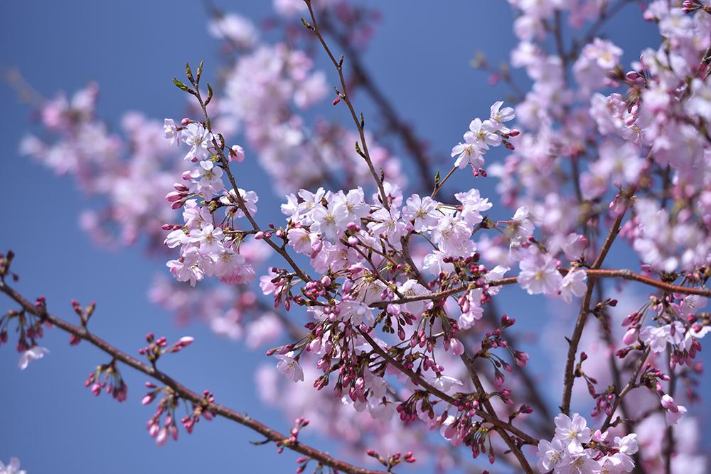 春らんまん_e0164563_09373913.jpg