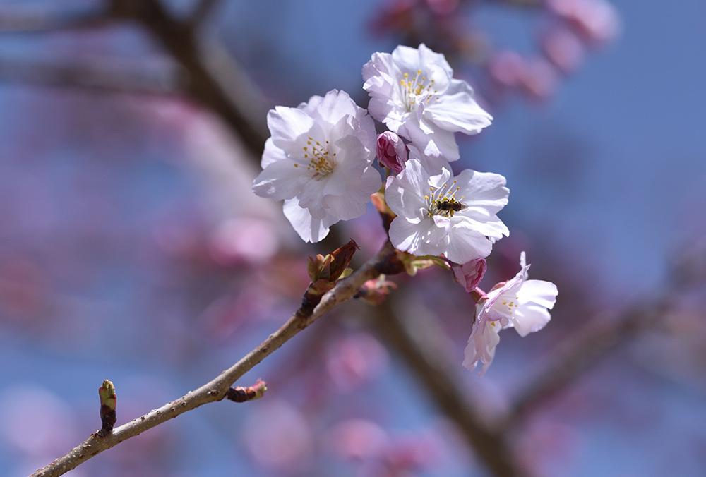 春らんまん_e0164563_09373915.jpg