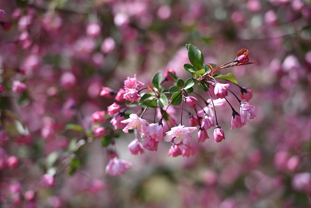 春らんまん_e0164563_09374870.jpg