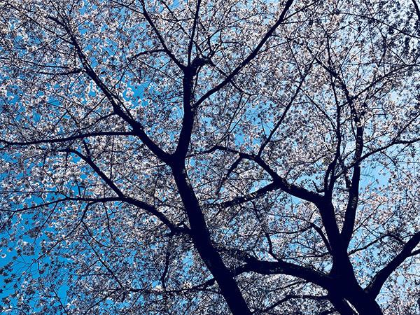 2018/04/02 花粉症:2018_b0171364_00522770.jpg