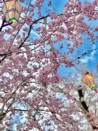 桜2018_f0126965_18151660.jpg