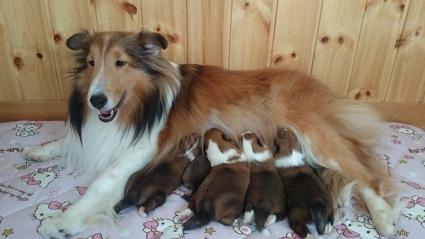 2胎無事出産致しました!_a0139367_22205665.jpg