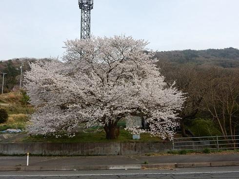 安浦桜巡り_e0175370_23210514.jpg