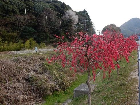 安浦桜巡り_e0175370_23211720.jpg