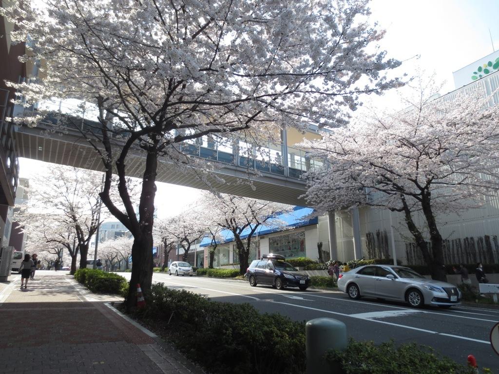 春_c0310571_09173002.jpg