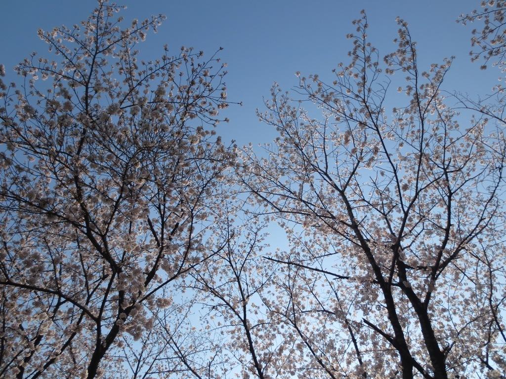 春_c0310571_09173035.jpg