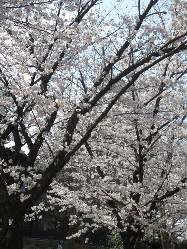 春_c0310571_09190418.jpg
