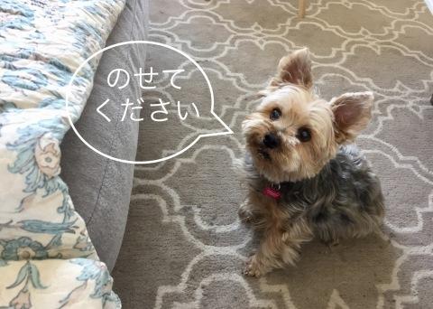 Foster Mom(YROA) ⑬  〜 とっとこテディくん_d0233672_06090710.jpeg
