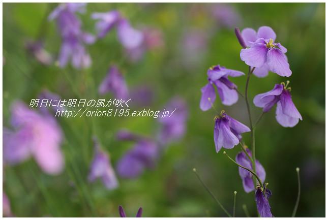 f0361079_22083734.jpg