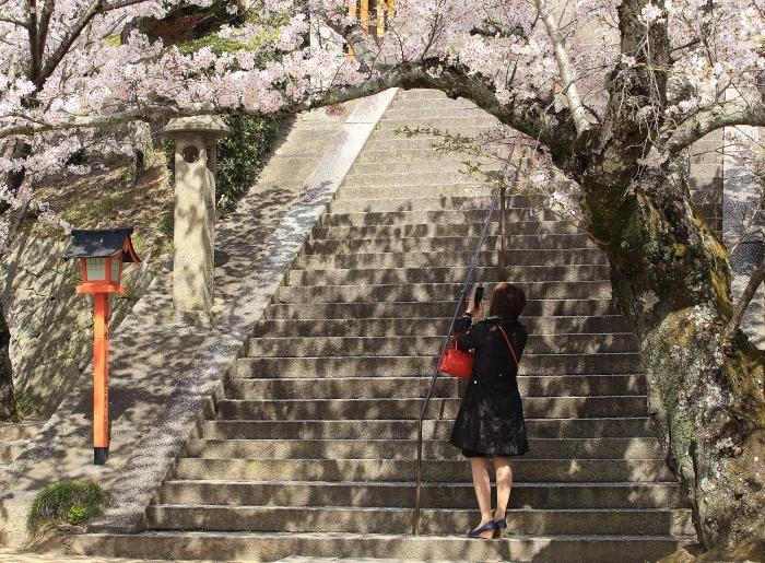 """春爛漫 """"尾道西国寺の桜"""" そのⅡ_a0140608_19055273.jpg"""