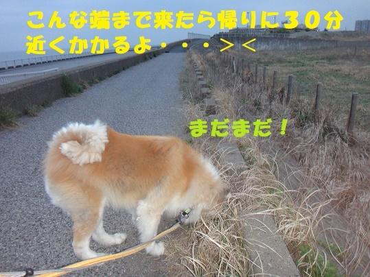 f0121712_08134912.jpg