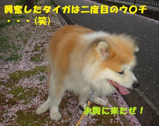 f0121712_08432011.jpg