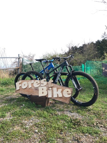 Forest Bike_e0069415_19261872.jpg