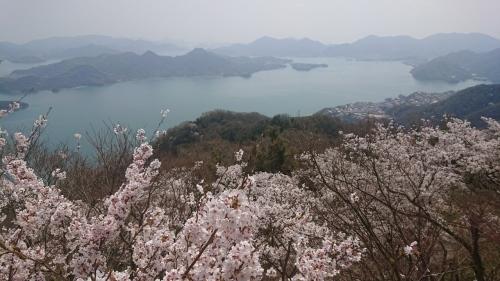 筆影山、竜王山の桜!見頃です!_c0339918_10073448.jpg