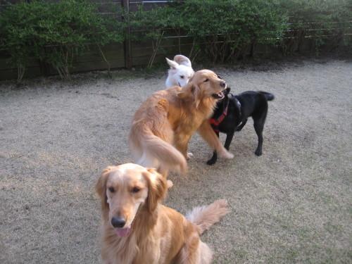 盲導犬候補生のブリッツ君_e0350927_10013006.jpg