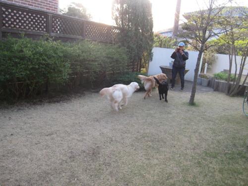 盲導犬候補生のブリッツ君_e0350927_10022093.jpg