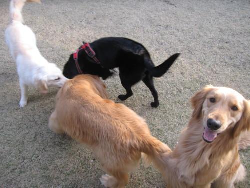 盲導犬候補生のブリッツ君_e0350927_10023471.jpg