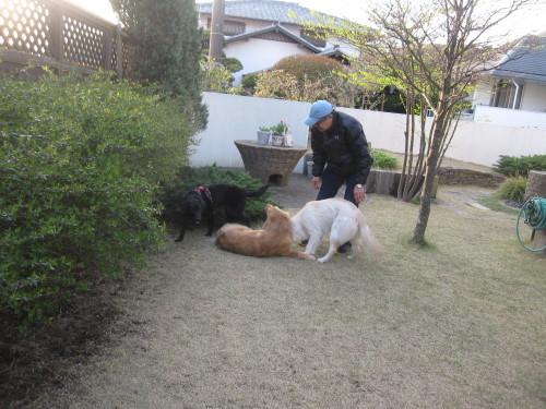 盲導犬候補生のブリッツ君_e0350927_10030296.jpg