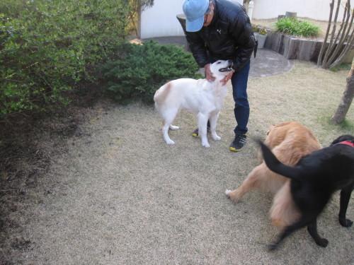 盲導犬候補生のブリッツ君_e0350927_10031679.jpg