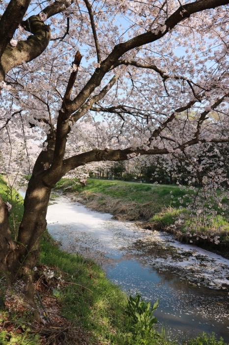 【東武動物公園】_f0348831_07192157.jpg