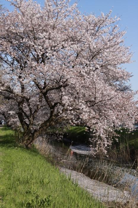 【東武動物公園】_f0348831_07192827.jpg