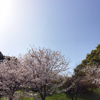 お花見遠足 1_f0035333_15371586.jpg
