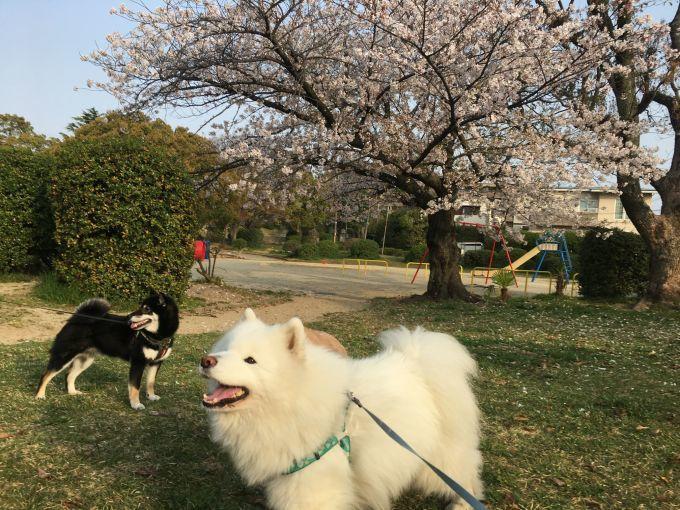 お花見三昧_f0128542_02001689.jpg
