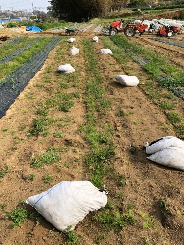 ズッキーニの畝作り始めます_c0222448_12293316.jpg