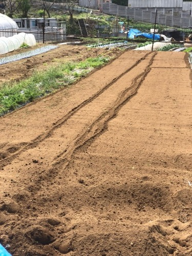 ズッキーニの畝作り始めます_c0222448_12301864.jpg