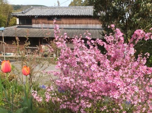 庭の赤い実~庭梅_d0336460_00082635.jpg