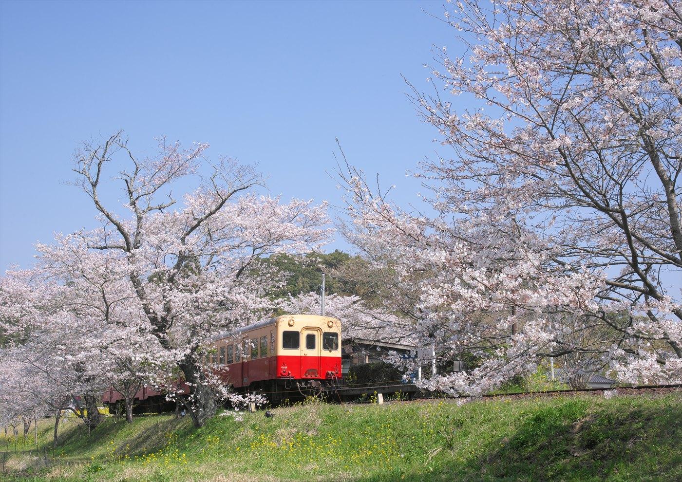 春の飯給駅_f0018464_6312566.jpg