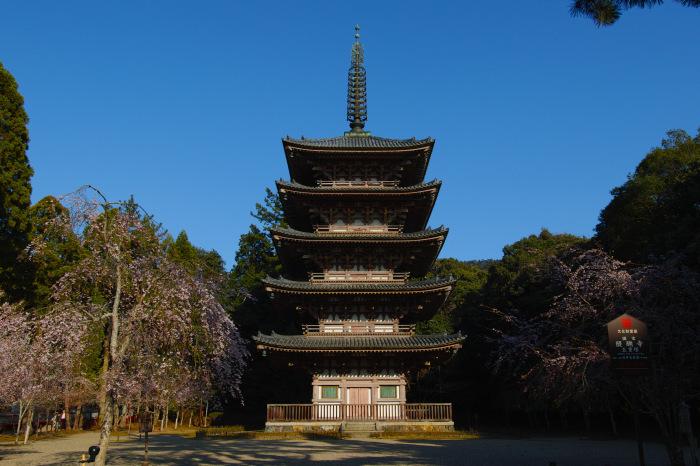 京都 桜2018 醍醐寺_f0021869_23435057.jpg
