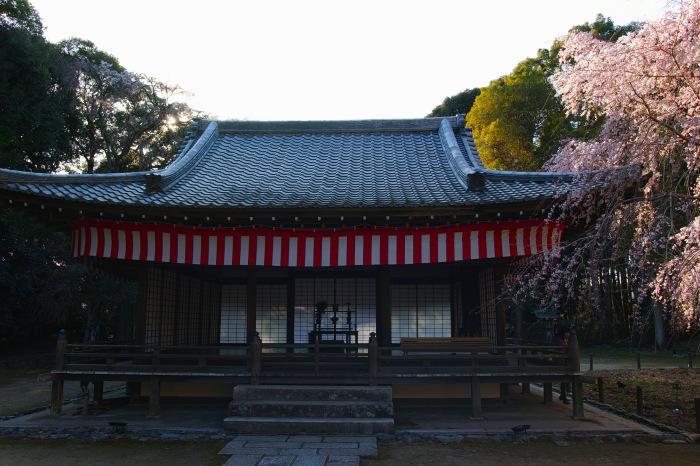 京都 桜2018 醍醐寺_f0021869_23435091.jpg