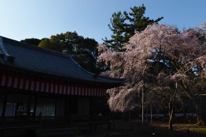 京都 桜2018 醍醐寺_f0021869_23435155.jpg