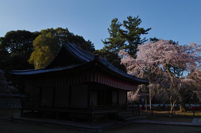 京都 桜2018 醍醐寺_f0021869_23435164.jpg