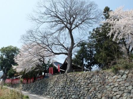春祭り_a0196870_07023681.jpg