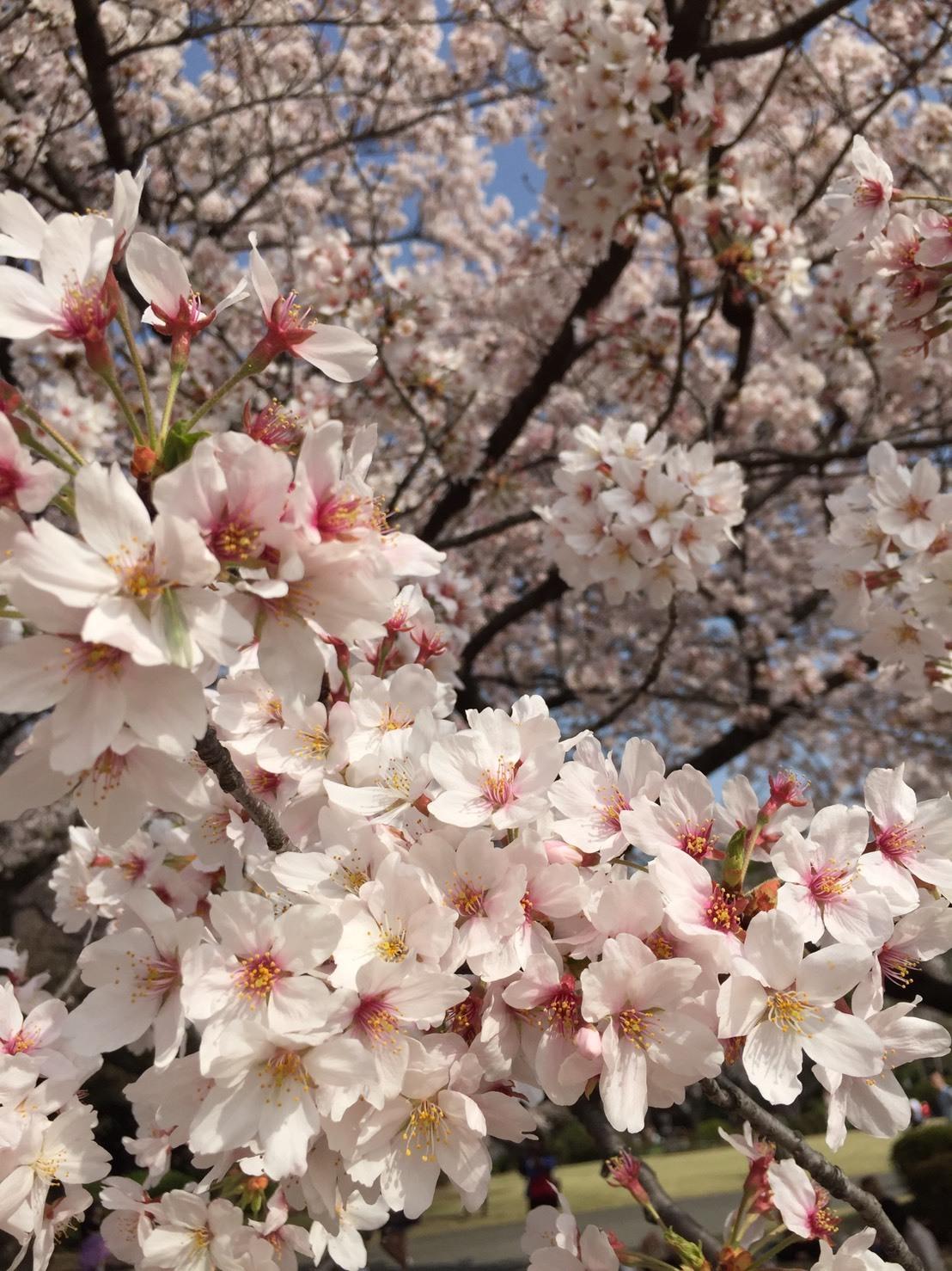 4月の休診日_a0324471_11511114.jpeg