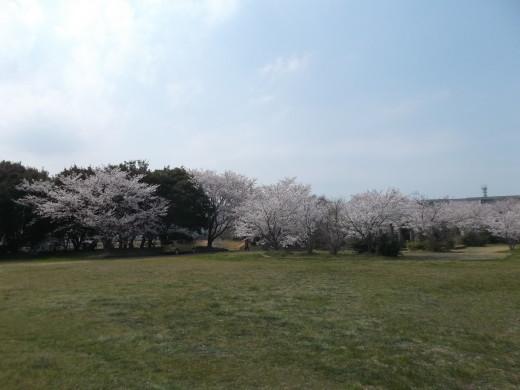 いちご狩り、桜の花見で楽しく笑ってきました~今年も頑張ってみます。_e0364586_14432772.jpg