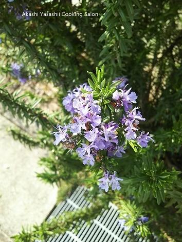 春の息吹~ナチュラルな庭の花_f0361692_16521726.jpg