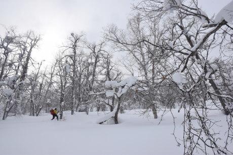 2018年3月3日3月3日 昼から[湯内山」を登って深雪を楽しむ_c0242406_17014632.jpg