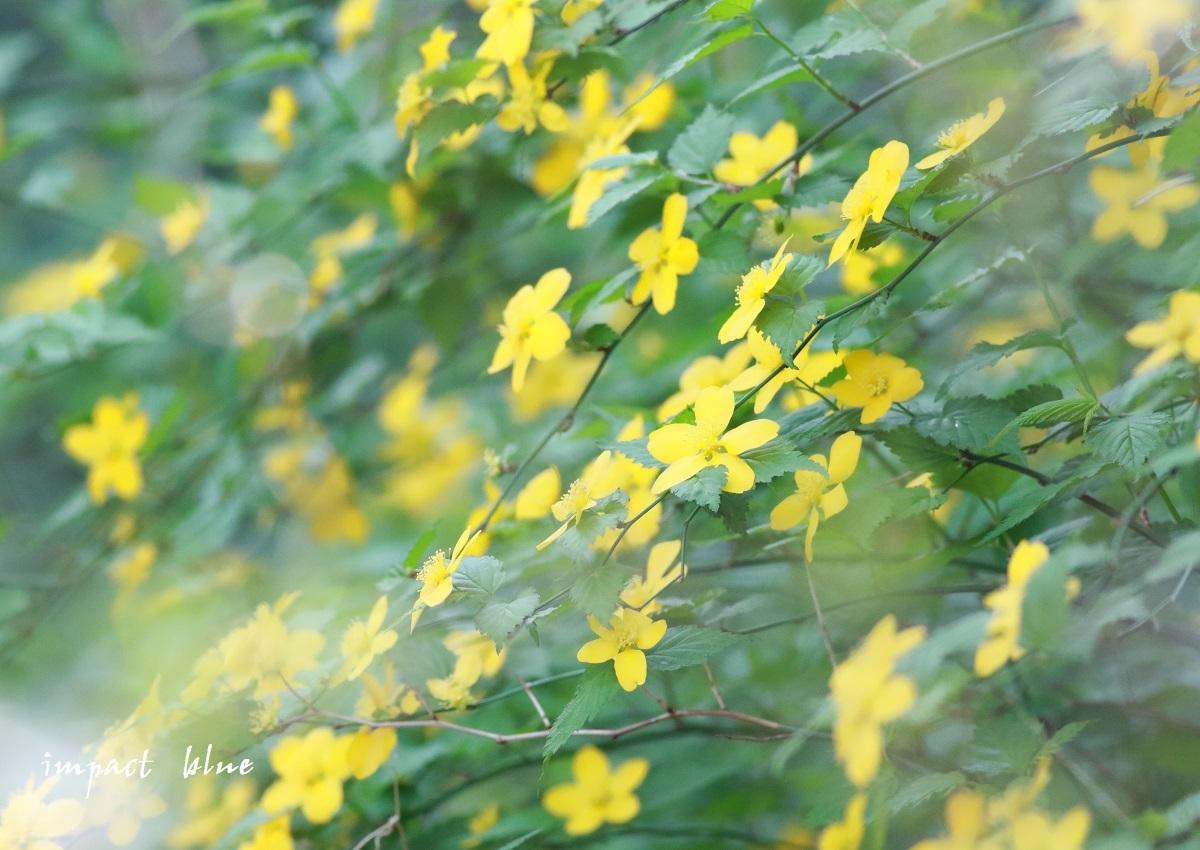 ぶらり、野草園散歩(*^^*)_a0355908_19472439.jpg